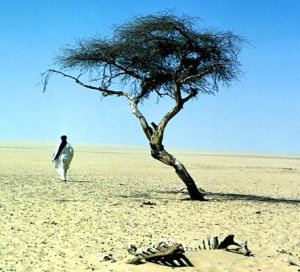 The Tree of Ténéré in the early 1970s. © Krohn Photos